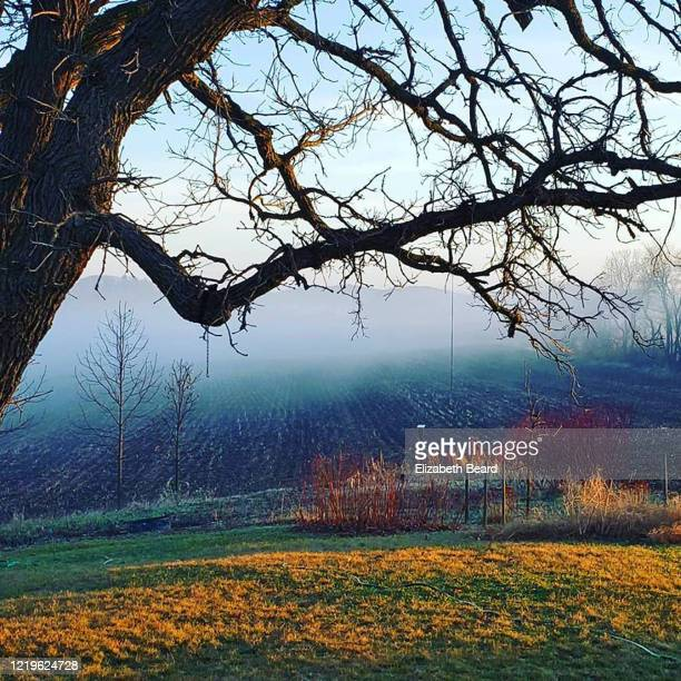 foggy cornfield in southern wisconsin in early spring - vilas_county,_wisconsin stock pictures, royalty-free photos & images
