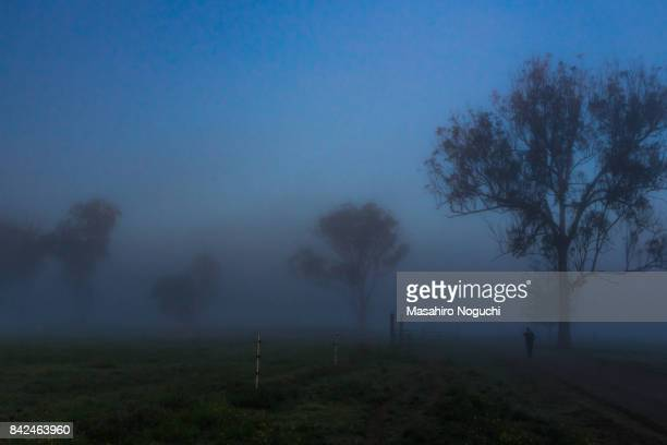 Foggy country road in the early morning,  the Scenic Rim Region, Queensland, Australia