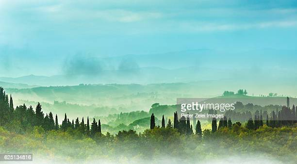 foggy countryside in tuscany - italian cypress stock pictures, royalty-free photos & images