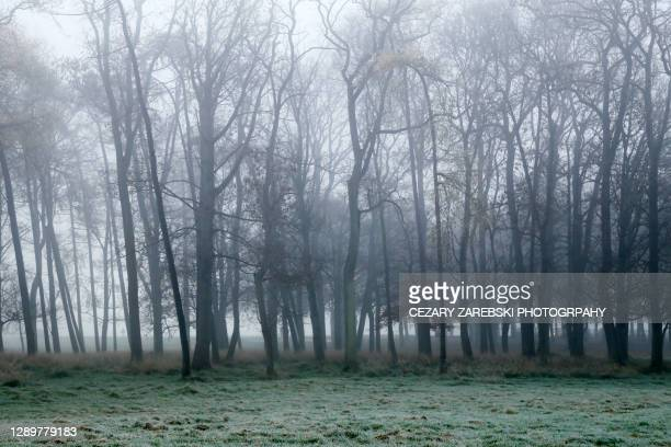 foggy  day - overcast stock pictures, royalty-free photos & images