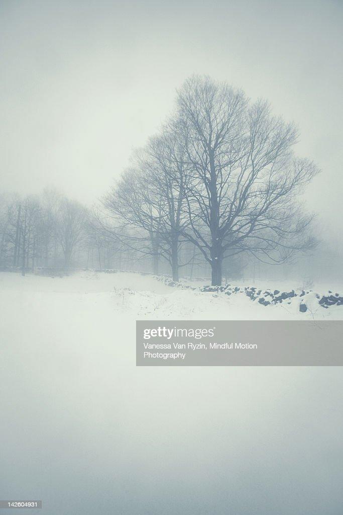 Foggy field : Stock Photo