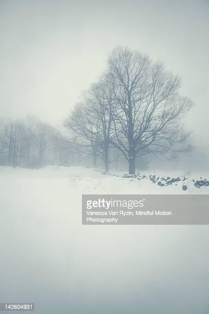 foggy field - vanessa van ryzin stock photos and pictures