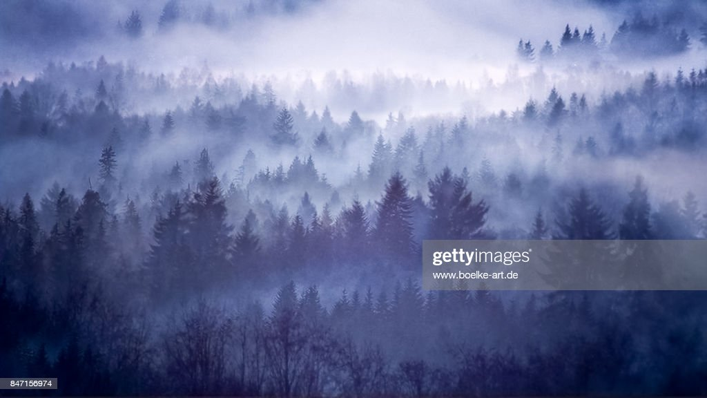 Foggy Forest in Norway