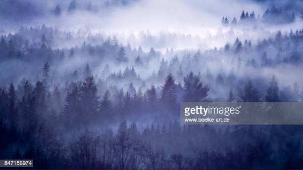 foggy forest in norway - spirituality stock photos and pictures