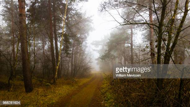 foggy forest path 'birch' - william mevissen stock-fotos und bilder