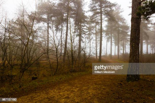 foggy forest path 'lake' - william mevissen stock-fotos und bilder