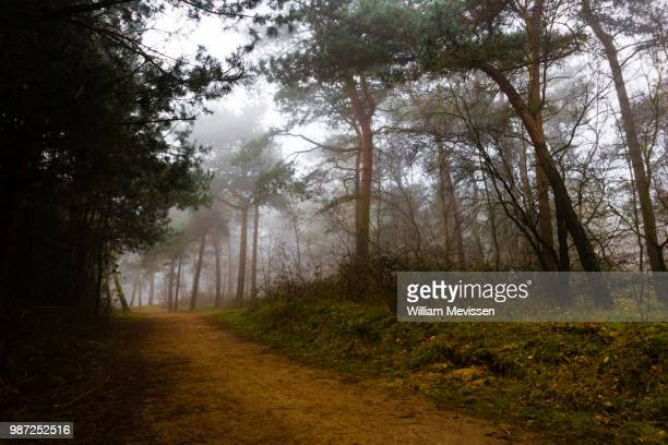 foggy forest path 'trees' - william mevissen stock-fotos und bilder