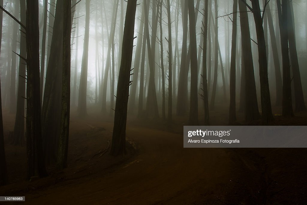 Foggy forest : Stock Photo