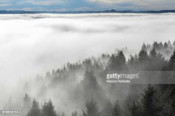 foggy forest - radicella stock photos and pictures