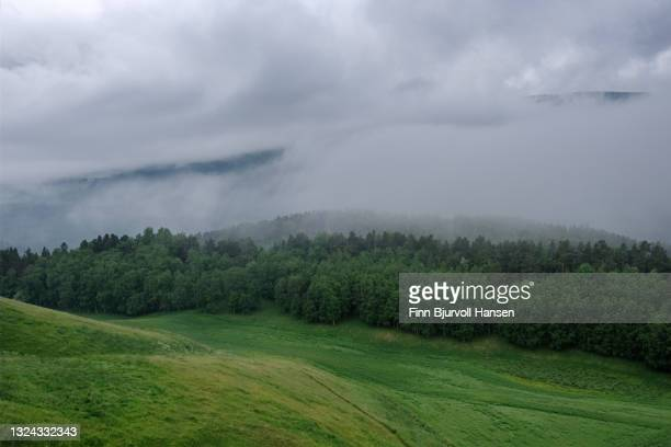 foggy forest with a green field in the foreground - finn bjurvoll stock-fotos und bilder