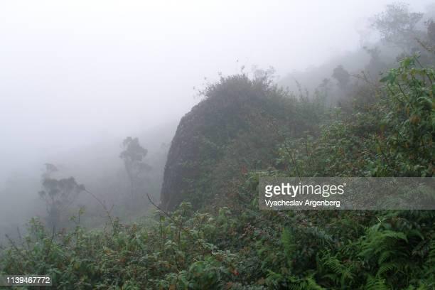 foggy humid tropical rainforest in sri lanka hills - argenberg stock-fotos und bilder