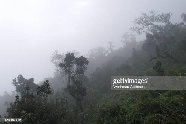 foggy humid tropical rainforest in sri lanka wilderness - argenberg stock-fotos und bilder