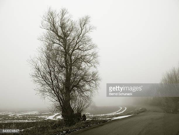foggy landscape in winter - bernd schunack stock photos and pictures