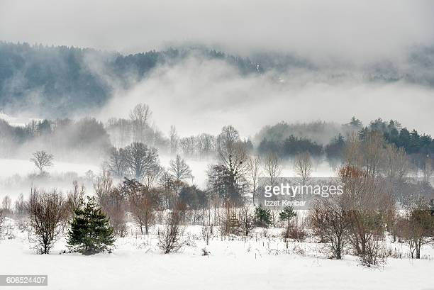 Foggy landscape near Abant in winter  Bolu Turkey