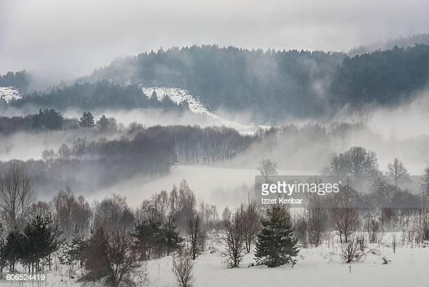Foggy landscape near Abant in winter  Bolu Turkey