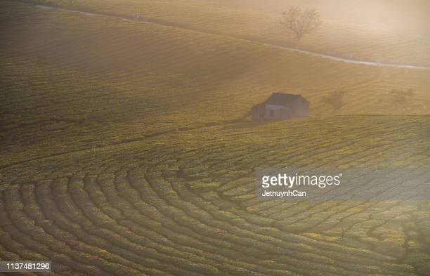 foggy landscape with sun light of layered tea hill in sunny early morning - son la province stock pictures, royalty-free photos & images