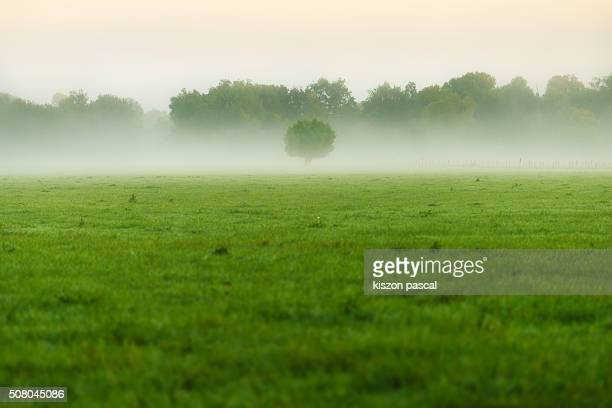 foggy morning in countryside of France