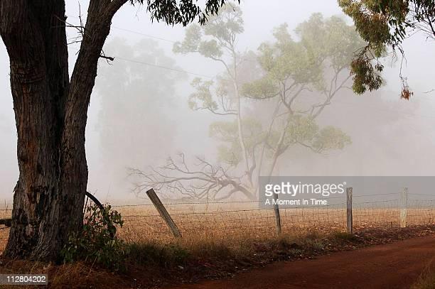 Foggy Morning In Frankland
