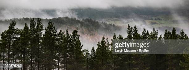 foggy morning in november - scotland stock pictures, royalty-free photos & images