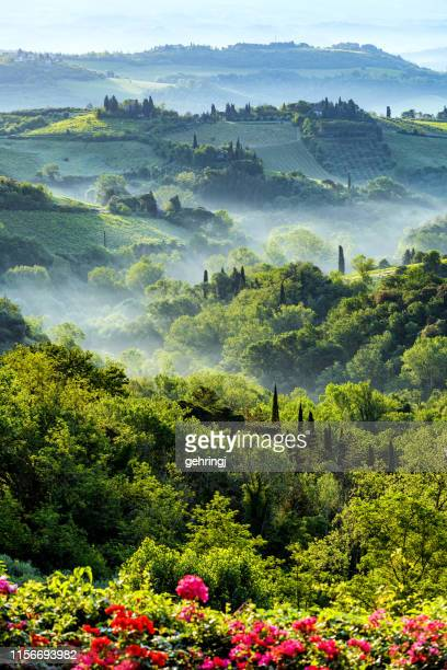 foggy morning in tuscany - italian cypress stock photos and pictures