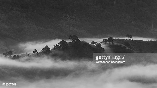 Foggy morning over forest in black and white