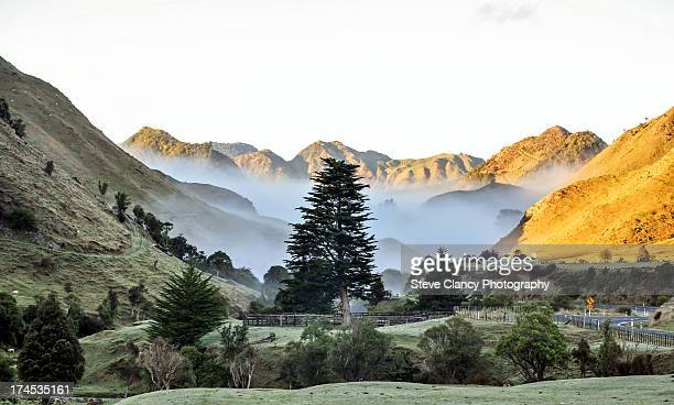 foggy morning - gisborne stock photos and pictures