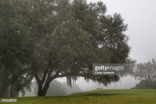 foggy morning - southeast stock pictures, royalty-free photos & images