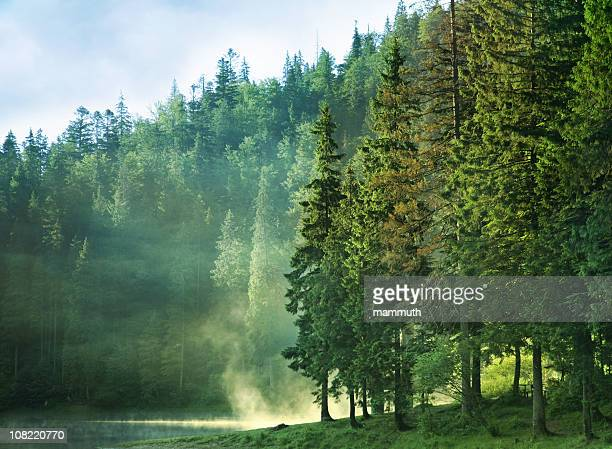 foggy mountain lake at dawn with pine forest