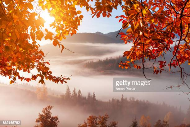 Foggy mountains in a frame of red autumn leaves