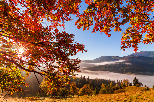Foggy mountains in a frame of red autumn leaves - gettyimageskorea