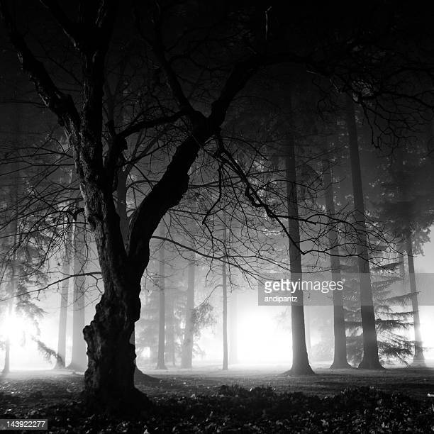 Foggy night in the forest