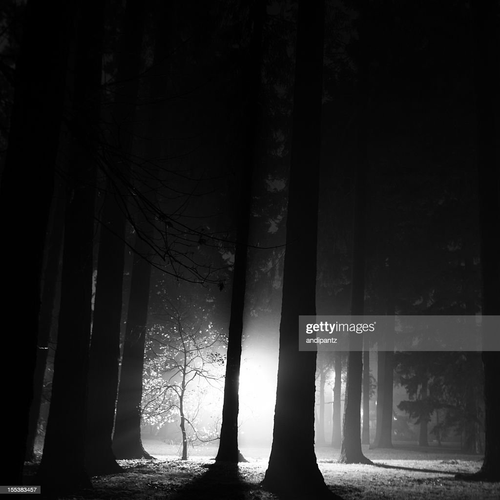Foggy night in the forest : Stock Photo