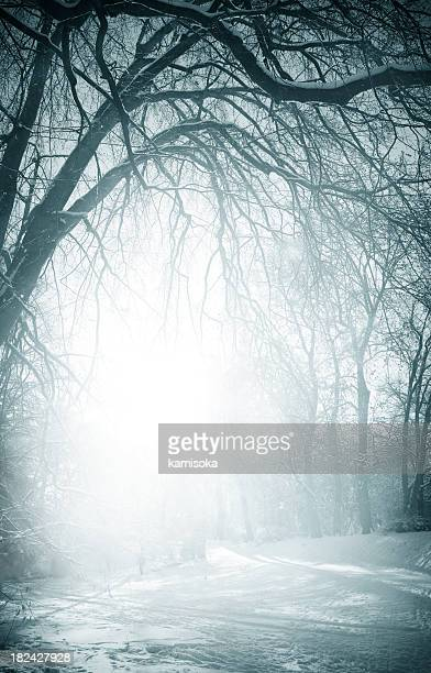 Foggy old trees near the road in winter