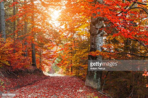 foggy path in the autumn park - anton petrus panorama of beautiful sunrise stock pictures, royalty-free photos & images