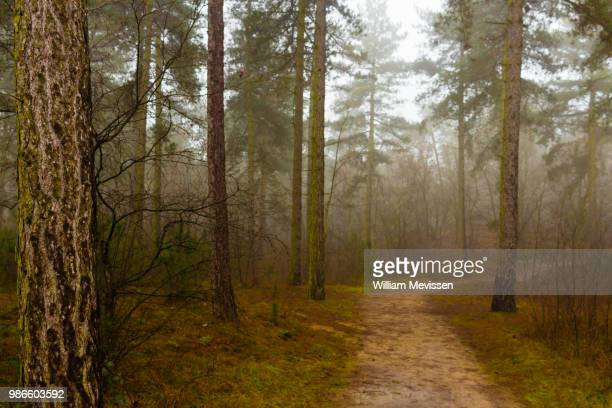foggy path - william mevissen stock photos and pictures
