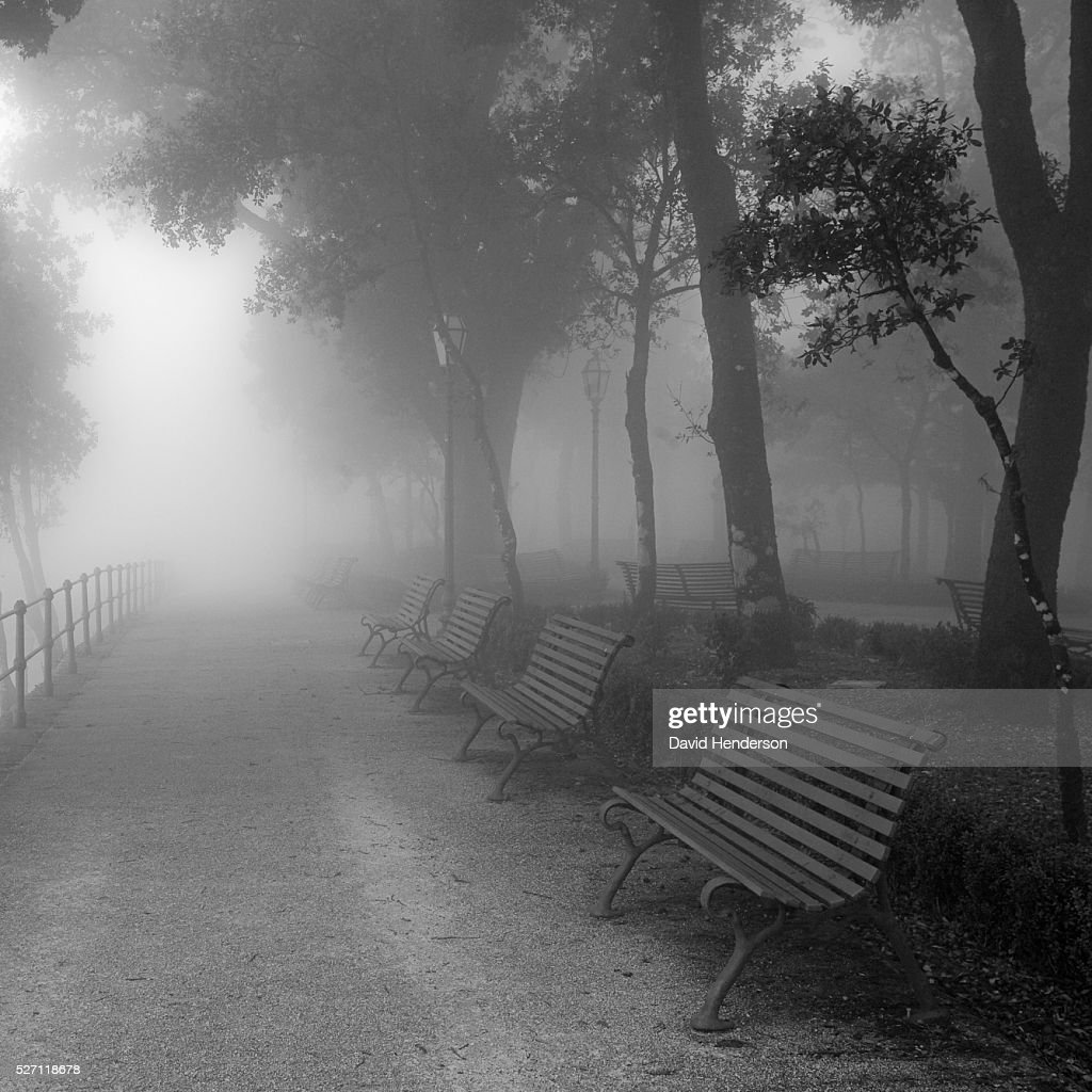 Foggy path through park : Stock Photo