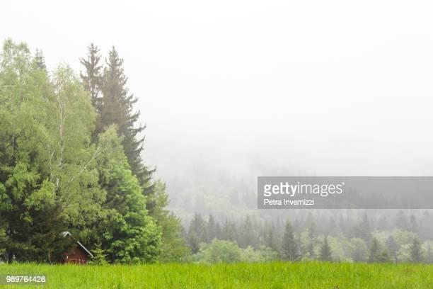 foggy! - petra invernizzi foto e immagini stock