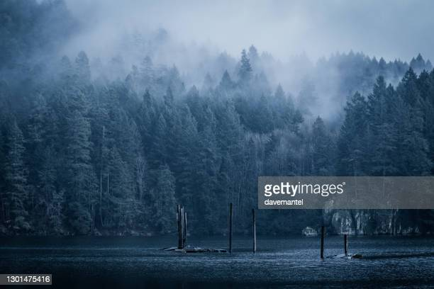 foggy rainforest by the sea - atmospheric mood stock pictures, royalty-free photos & images
