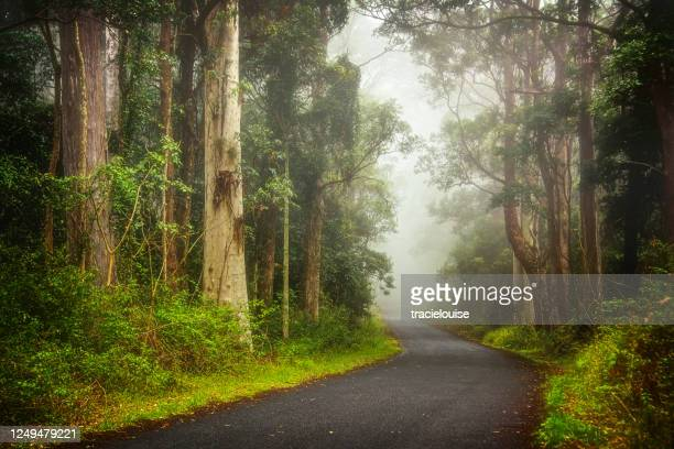 foggy road into the forest - khaki green stock pictures, royalty-free photos & images