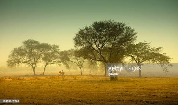 Foggy, rural landscape