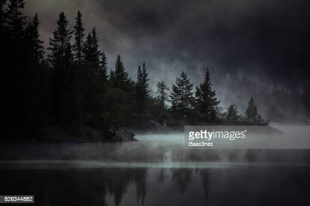 foggy, spooky and mysterious evening in the forest - data lake bildbanksfoton och bilder