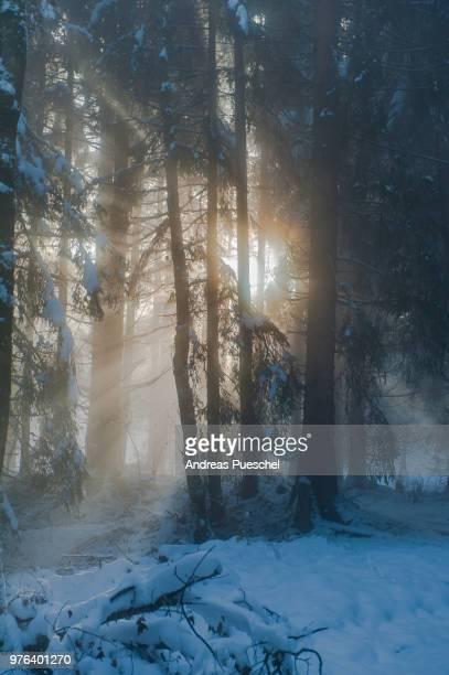 foggy sunrays - blue hour stock-fotos und bilder