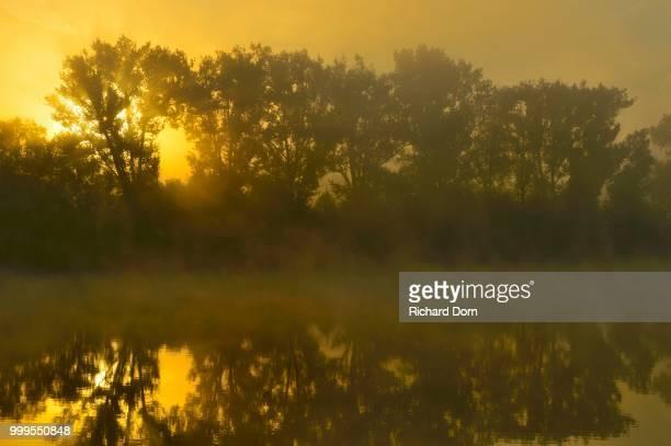 Foggy Sunrise behind trees on the Old Rhine, Bislicher Insel, Xanten, Niederrhein, North Rhine-Westphalia, Germany