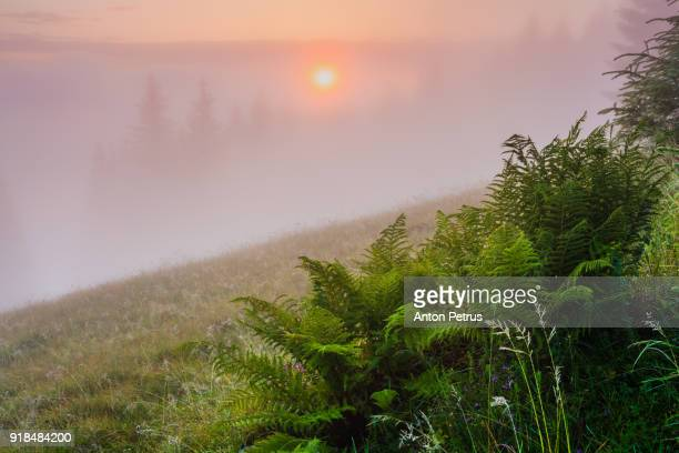 Foggy sunrise in the mountains in spring