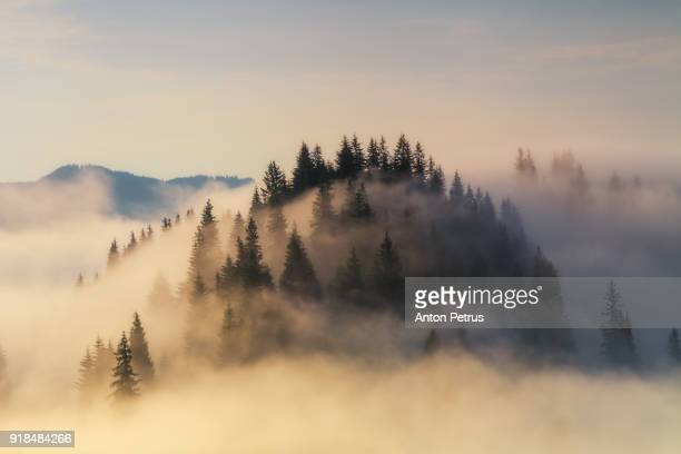 foggy sunrise in the mountains in summer - nebel stock-fotos und bilder