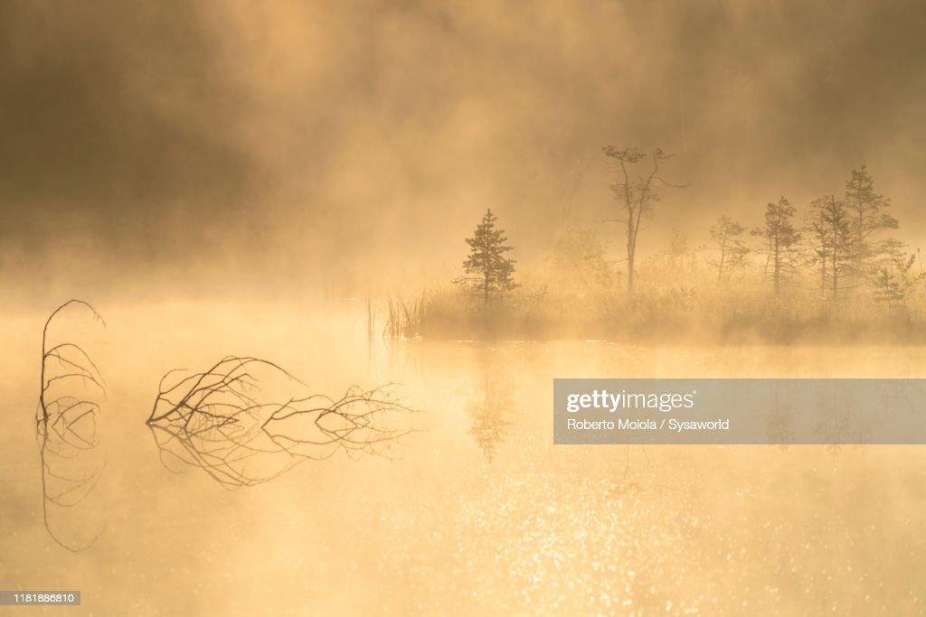 Foggy sunrise on lone trees, Pian di Gembro, Lombardy, Italy : Stock Photo
