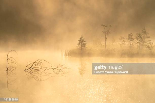 foggy sunrise on lone trees, pian di gembro, lombardy, italy - humid stock pictures, royalty-free photos & images