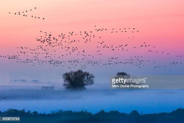 foggy sunrise - マーセド郡 ストックフォトと画像