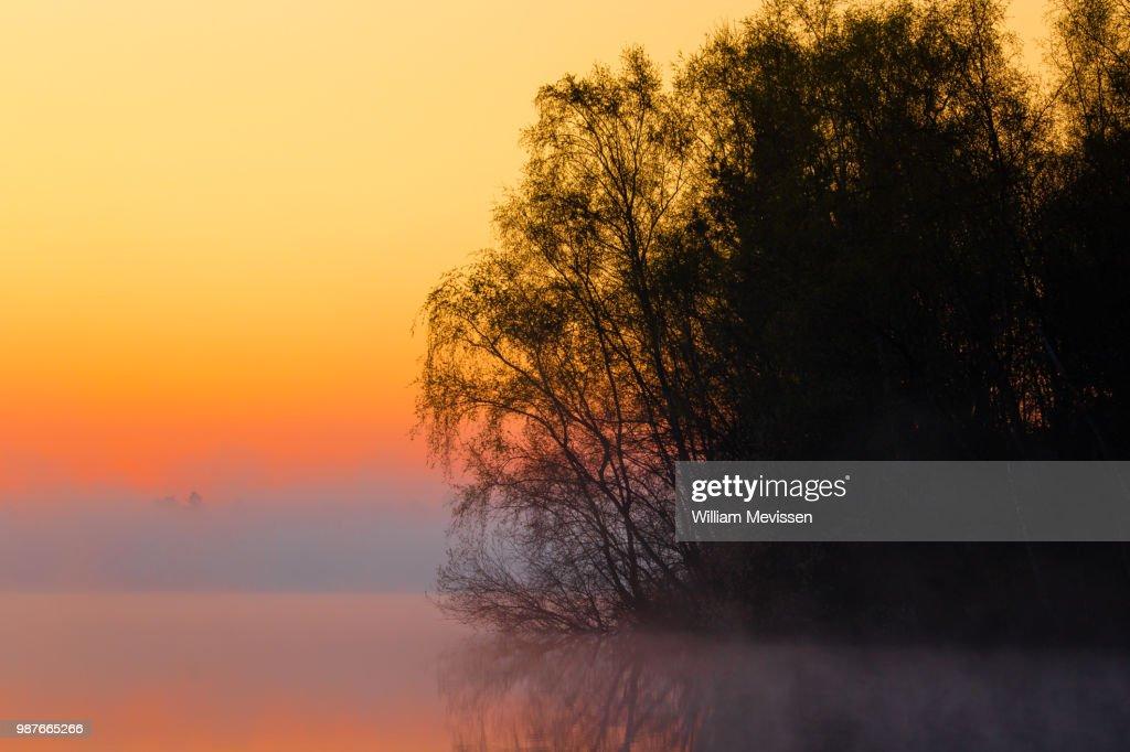 Foggy Sunrise 'Silhouettes' : Stockfoto