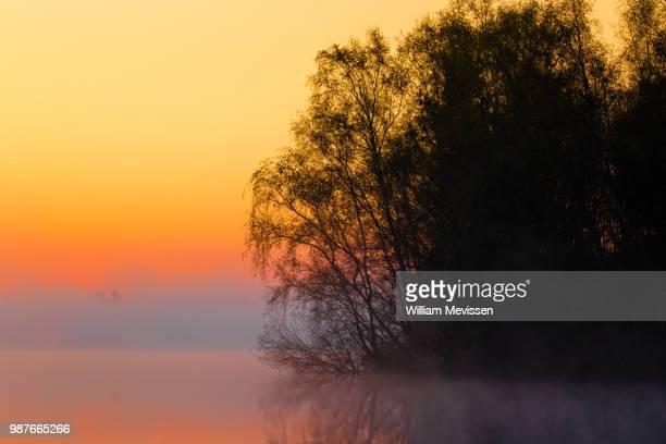 foggy sunrise 'silhouettes' - william mevissen bildbanksfoton och bilder